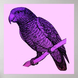 Purple Parrot Poster