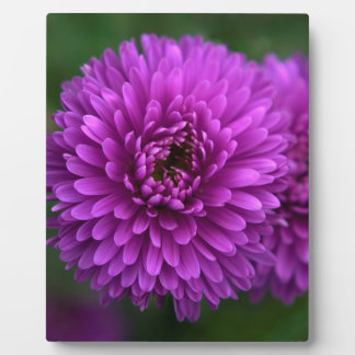 Purple Passion Display Plaque