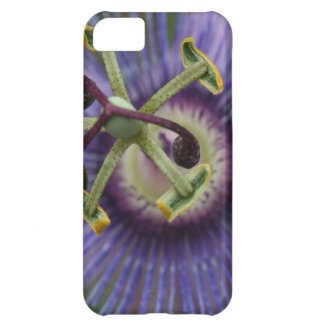 Purple Passion Flower iPhone 5C Cover