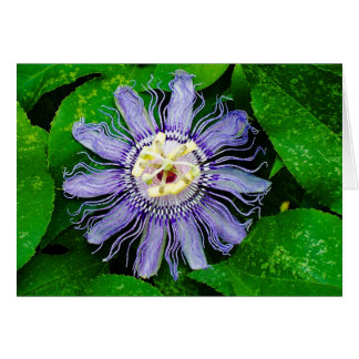Purple Passion Flower... Greeting Card