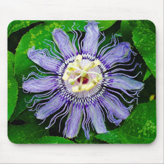 Purple Passion Flower Mouse Pads