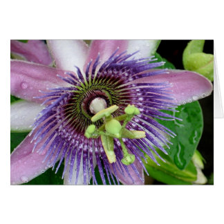 Purple Passion Flower Note Card