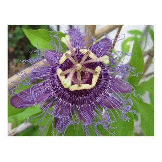 Purple Passion Flower Postcards