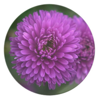Purple Passion Plate