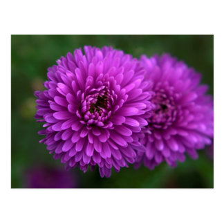 Purple passion postcard