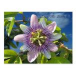 Purple Passion Save the Date Postcard