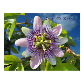 Purple Passion Save the Date Postcard
