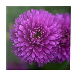 Purple Passion Tiles