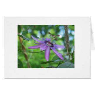 Purple Passions #2 Greeting Card