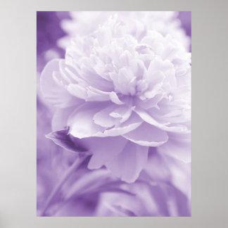 Purple Peony Poster