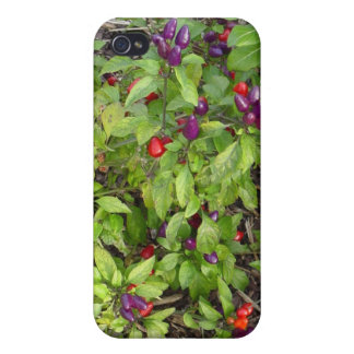 Purple Peppers! Covers For iPhone 4