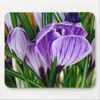 Purple Petals Crocus Flower Mouse Pad