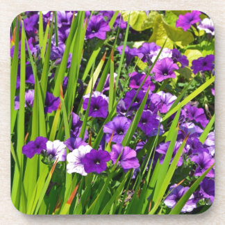 Purple petunia floral print drink coasters