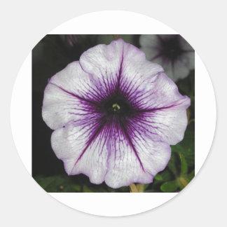 Purple Petunia Round Sticker