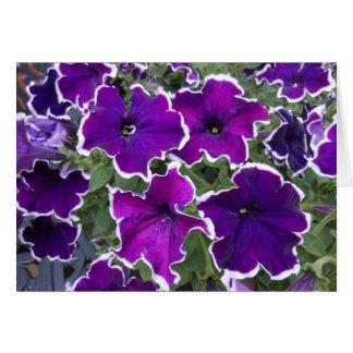 Purple Petunias Card