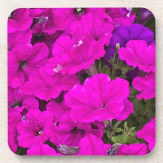Purple Petunias Coaster