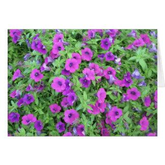Purple Petunias Greeting Card