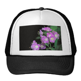 purple phacelia cap