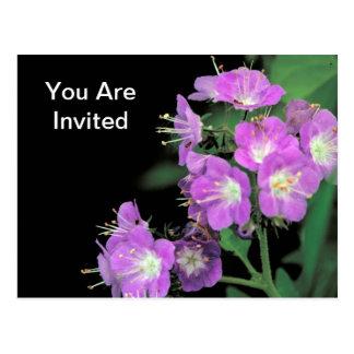 purple phacelia postcard