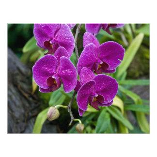 Purple Phalaenopsis Orchid Personalized Invite