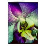 Purple Phalenopsis Orchid Blank Greeting Card