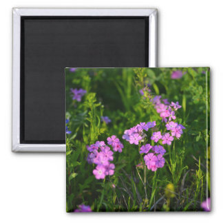Purple Phlox Square Magnet