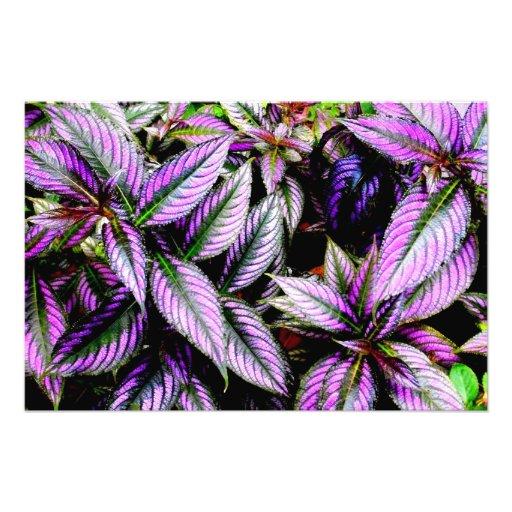'Purple' Photographic Print