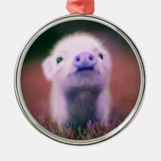 Purple Pigsy Christmas Ornament