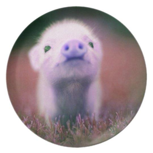 Purple Pigsy Dinner Plate