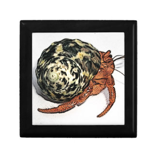 Purple Pincher Hermit Crab Design Gift Box