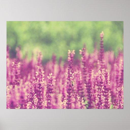 Purple Pink Flowers Field Posters