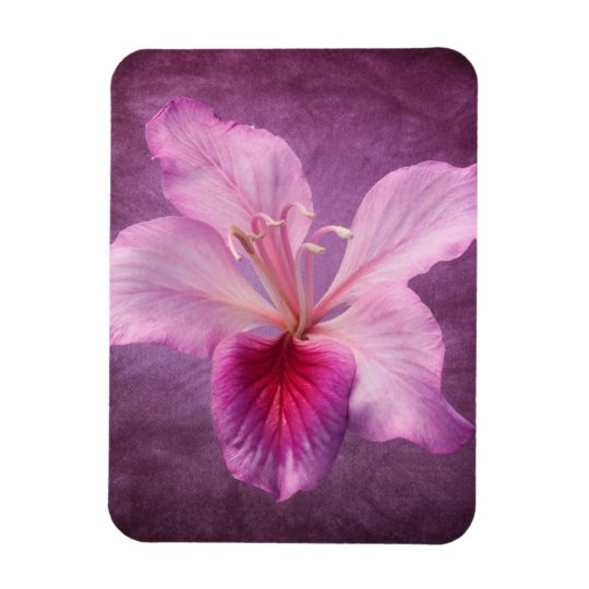 Purple Pink Orchid Tree Flower Floral Rectangular Photo Magnet
