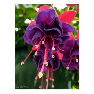Purple Pink Passion Postcard