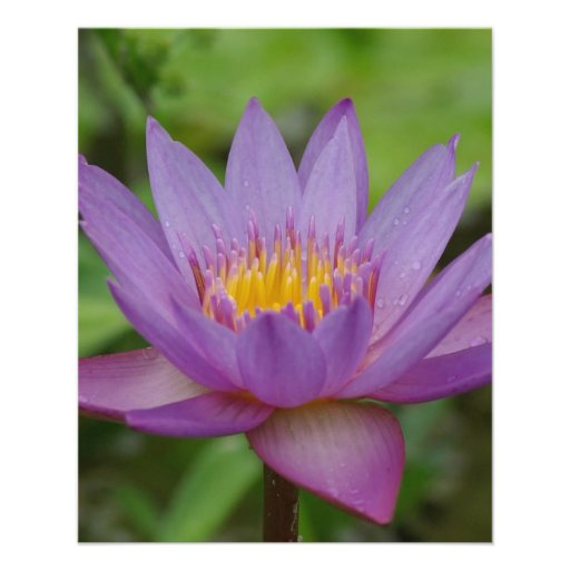 Purple Pink Water Lily Flower Personalized Flyer