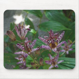 Purple pink white striped orchid like flower lilly mouse pad