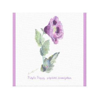 Purple Poppy, papaver somniferum by janet davies Stretched Canvas Prints