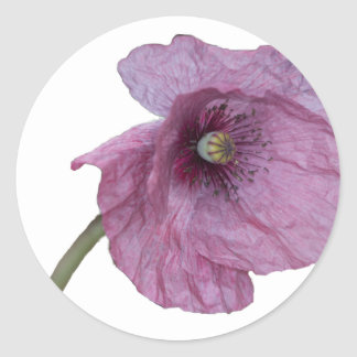 Purple Poppy Round Sticker