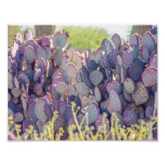 Purple Prickly Pears | Poster