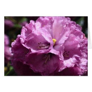Purple Rhododendron Flower Card