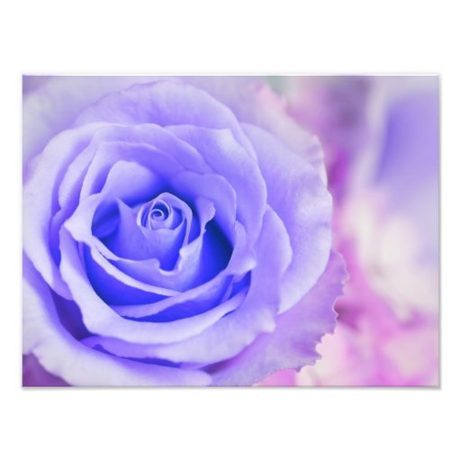 Purple Rose Background Customized Template Photographic Print