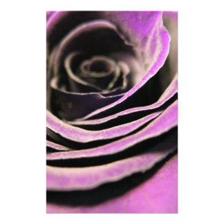Purple Rose Flyers