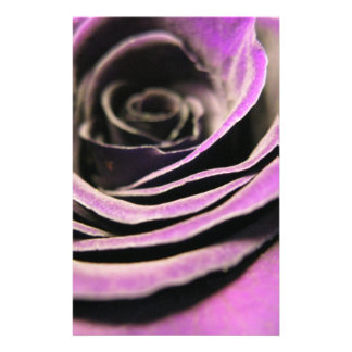 Purple Rose Full Color Flyer