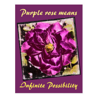 Purple Rose means Infinite Possibility postcard