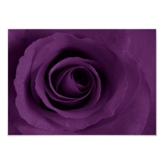 purple rose of Etsy Poster