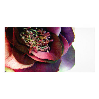 Purple Rose Photo Cards