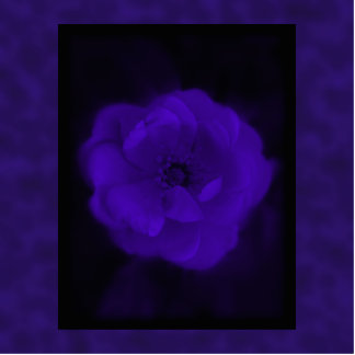 Purple Rose With Black and Dark Purple Photo Cut Out