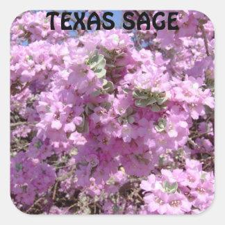 Purple sage in full bloom. square sticker