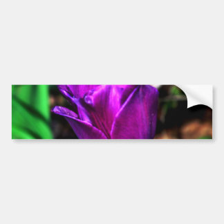 Purple Satin Tulip Bumper Sticker