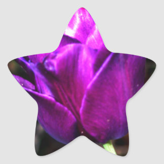 Purple Satin Tulip Star Sticker
