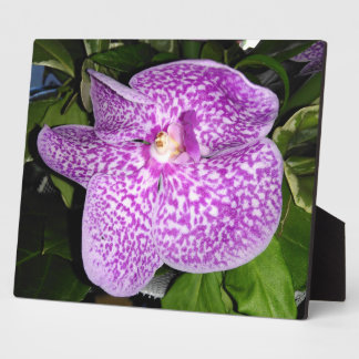 Purple Speckled Orchid Plaque